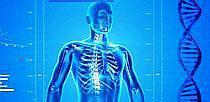 human-skeleton-uvod.jpg