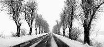 zimnou_alejou_veronika_bahnova-uvod.jpg