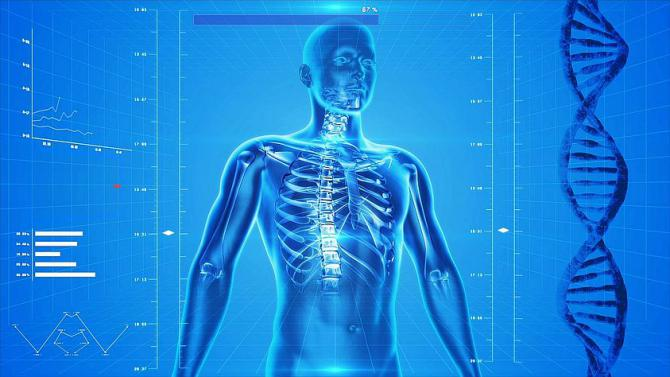 human-skeleton.jpg