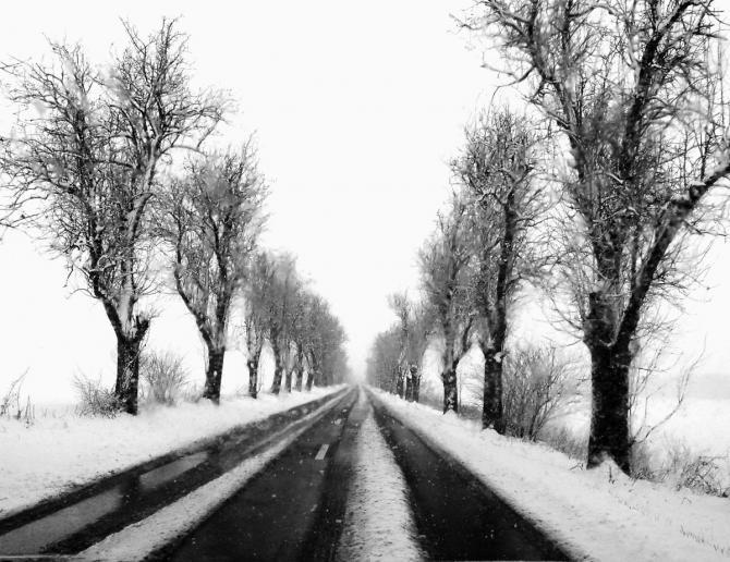 zimnou_alejou_veronika_bahnova.jpg